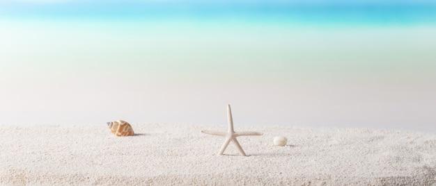 Estrela do mar e conchas na praia ensolarada