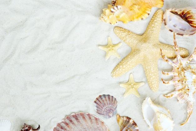 Estrela do mar e conchas na praia