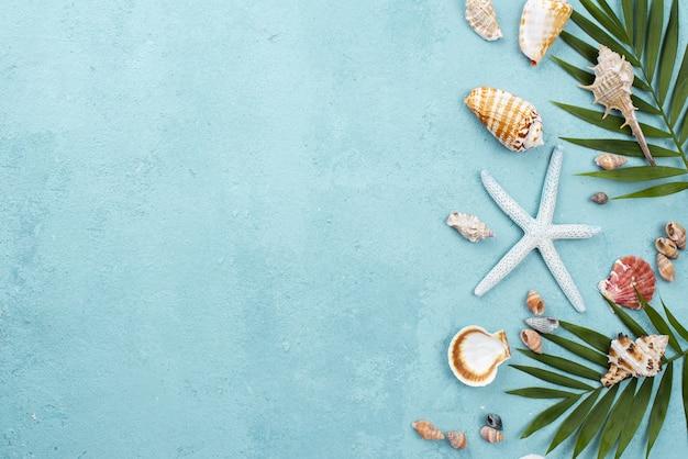 Estrela do mar e moluscos com cópia-espaço