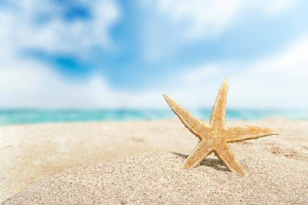Estrela do mar em close-up na praia em dia de sol