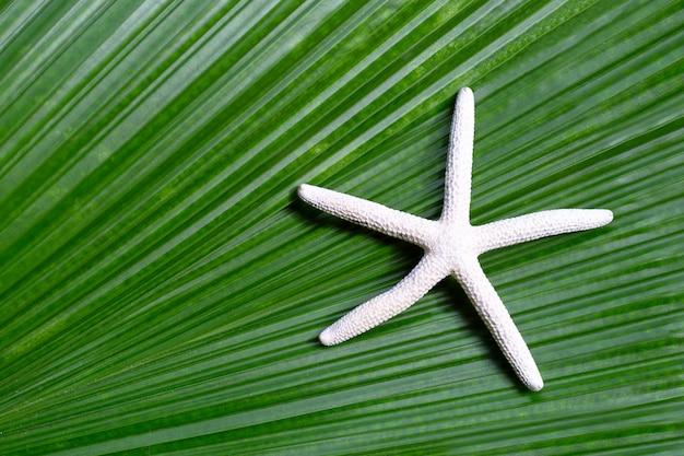 Estrela do mar em folhas de palmeira tropical. aproveite o conceito de férias de verão.