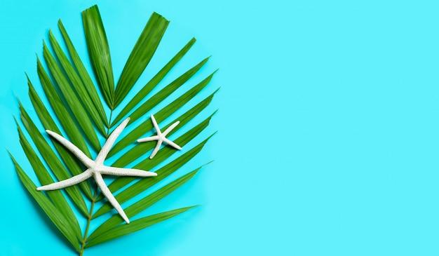 Estrela do mar em folhas de palmeira tropical em fundo laranja. aproveite o conceito de férias de verão.