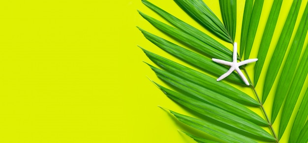 Estrela do mar em folhas de palmeira tropical