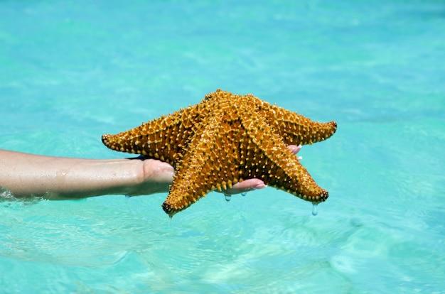 Estrela do mar em mãos no mar