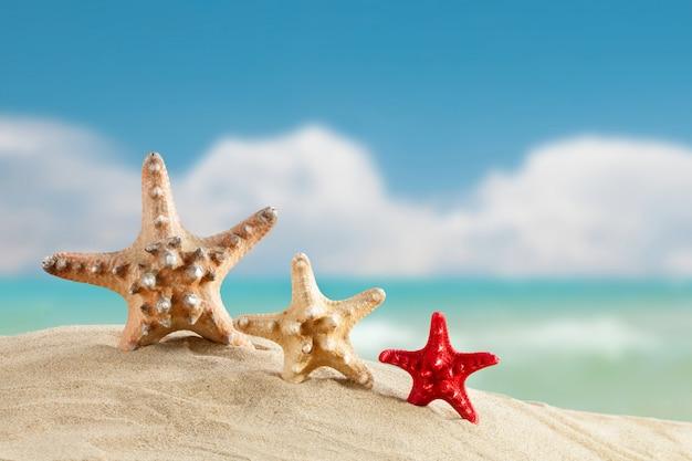 Estrela do mar em pé no mar