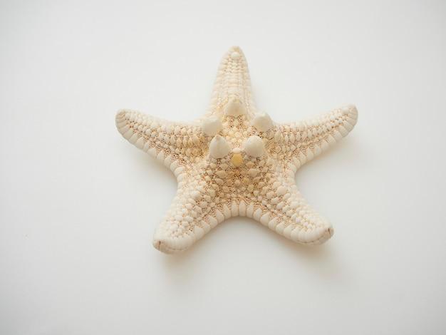 Estrela do mar isolada no fundo branco com contornos, espaço para mensagens de texto, vista superior