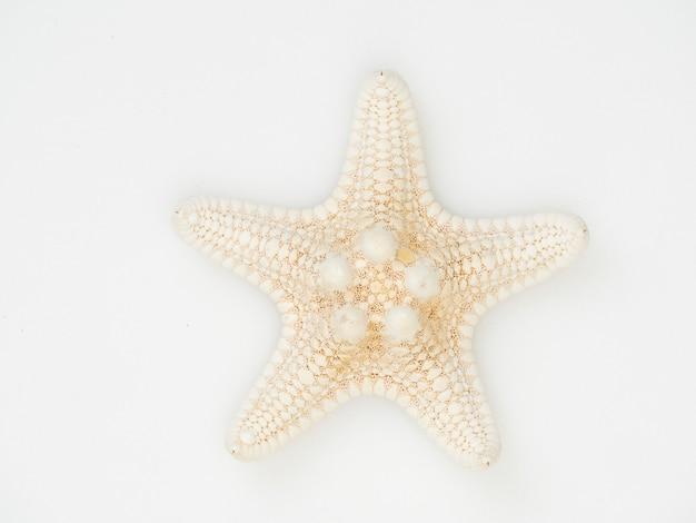Estrela do mar isolada no fundo branco com contornos