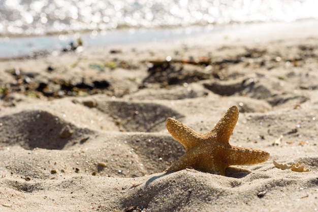 Estrela do mar na areia do oceano em um dia quente de verão. fundo de verão