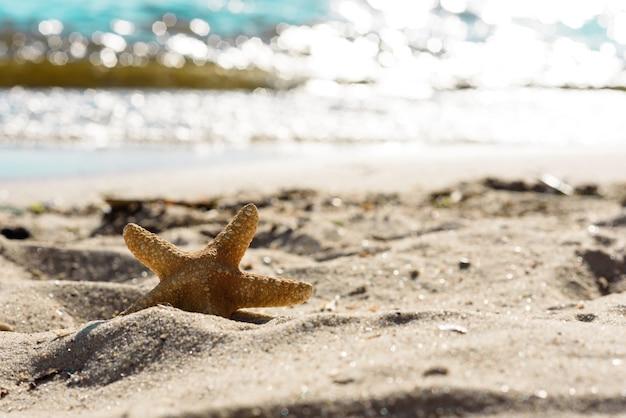 Estrela do mar na areia do oceano em um dia quente de verão