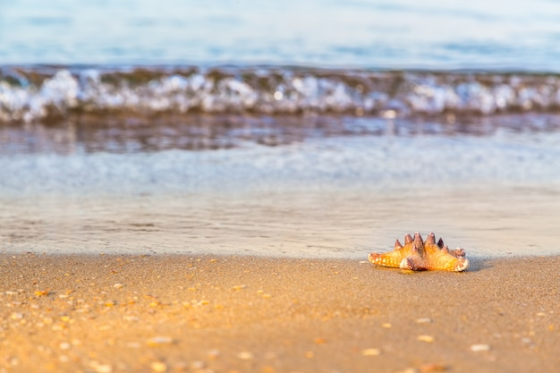 Estrela do mar na areia molhada da praia