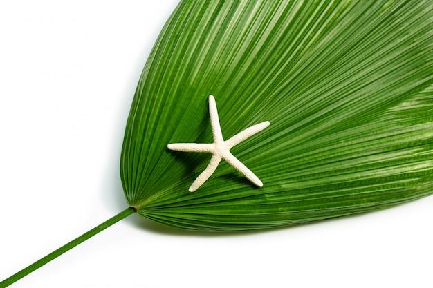 Estrela do mar na palma de fã de fiji no fundo branco. aproveite o conceito de férias de verão.