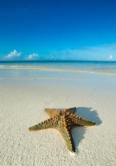 Estrela do mar na praia. mar