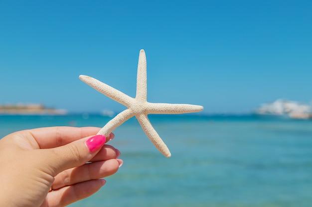 Estrela do mar na praia nas mãos de uma mulher