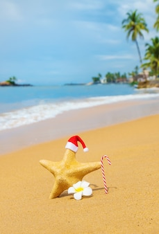 Estrela do mar, papai noel na praia. foco seletivo. natureza.