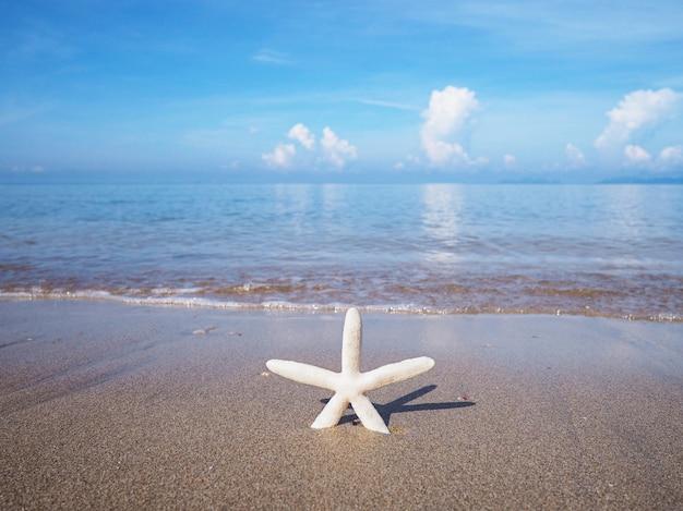 Estrela do mar pequena branca no litoral.