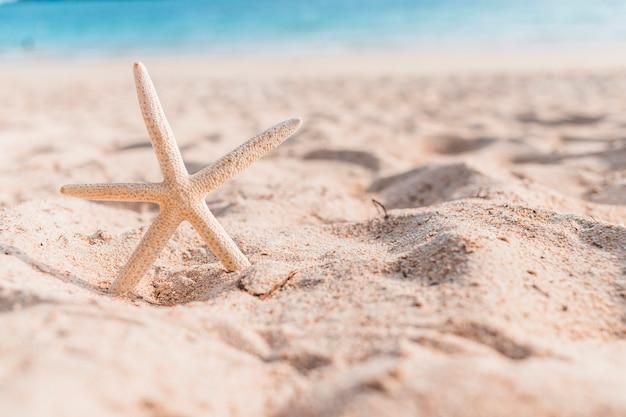 Estrela do mar pequena na areia