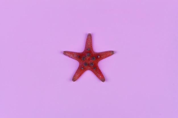 Estrela do mar vermelha em close-up rosa