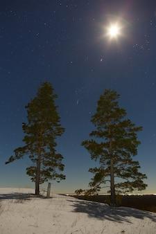Estrelas com lua cheia no céu noturno, acima das árvores no inverno.