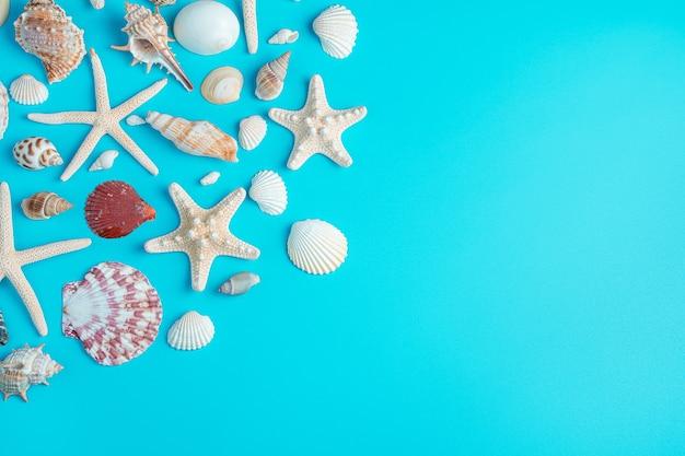 Estrelas do mar e conchas de diferentes formas em um fundo azul