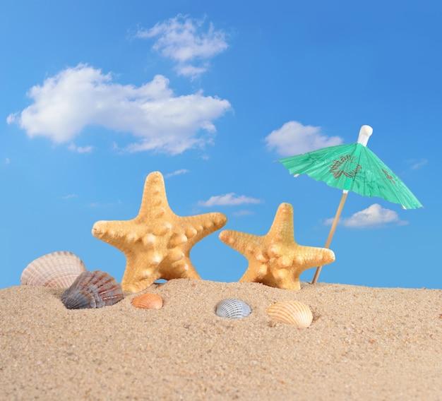 Estrelas do mar e conchas na areia da praia contra o céu azul