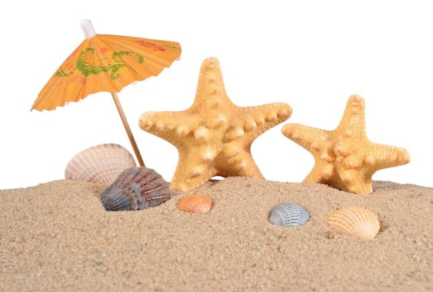 Estrelas do mar e conchas na areia em um fundo branco