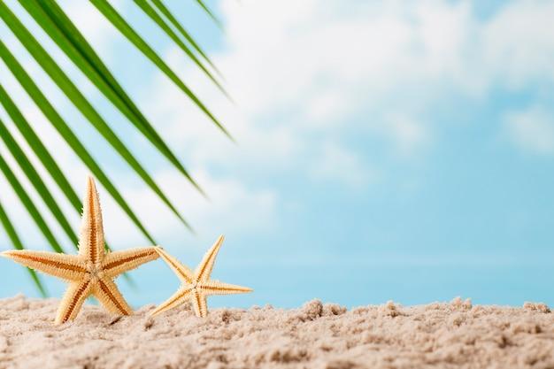 Estrelas do mar na praia. fundo de relaxamento.
