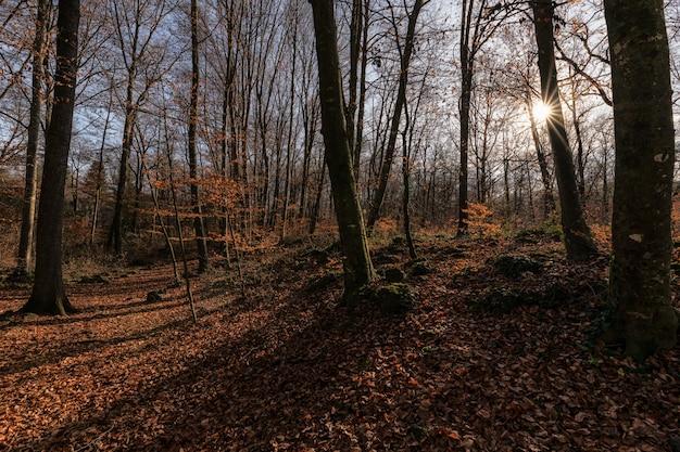 Estrelas do sol lançando sombras de árvores acima de folhas caídas em uma bela cena de outono em olot, espanha