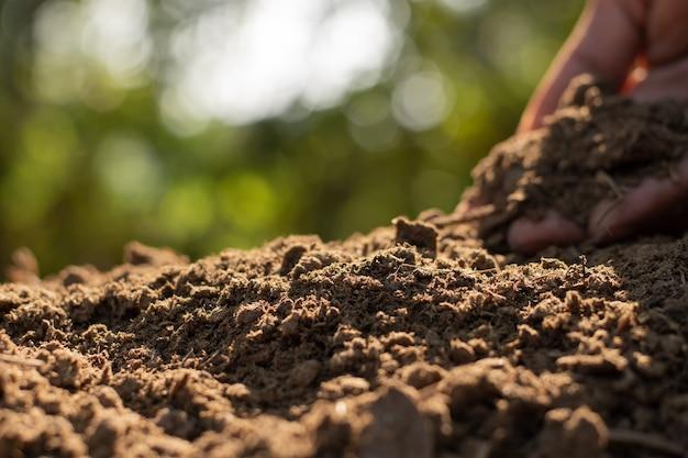 Estrume ou estrume de vaca para cultivo e agricultura.