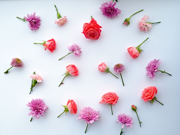 Estrutura das rosas no fundo branco. lay plana.