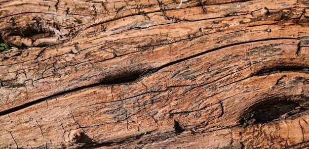 Estrutura de relevo de uma velha árvore sem casca. decoração de fundo