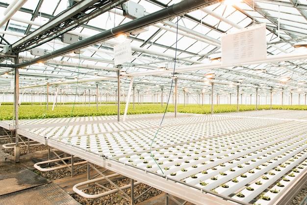 Estufa leve e produção de frutas e legumes.