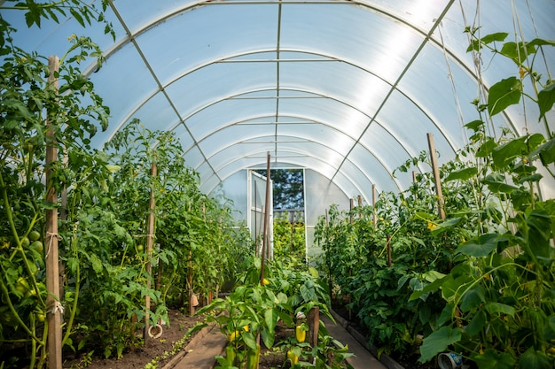 Estufa privada interna com plantas no jardim de casa