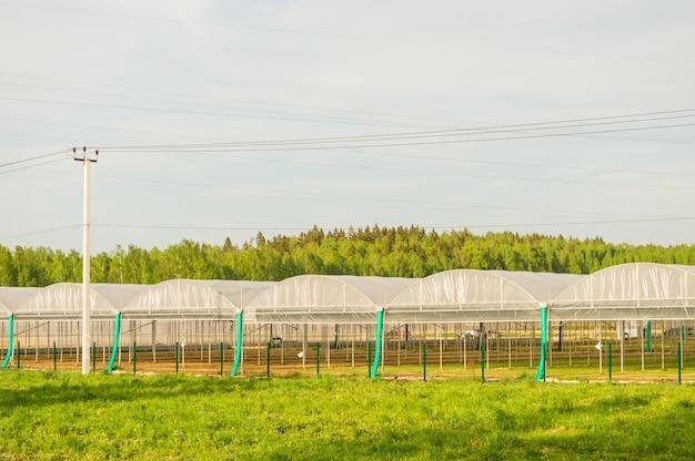 Estufas de vidro comerciais. produção industrial de alta tecnologia de hortaliças e flores.