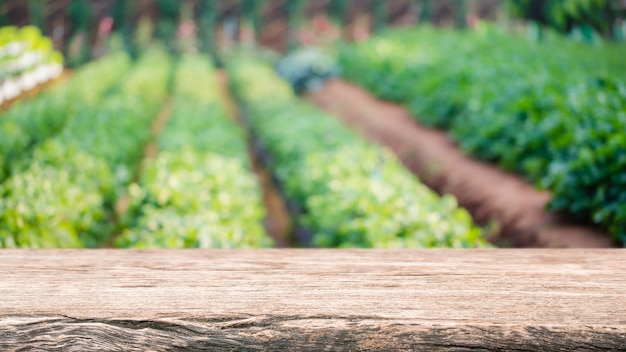 Esvazie o tampo da mesa de madeira e a árvore e o vegetal verdes borrados em explorações agrícolas.
