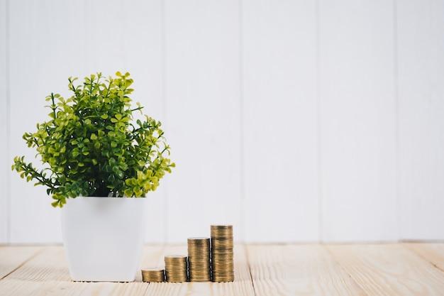 Etapa de pilhas das moedas e pouca árvore no vaso, na visão do planeamento empresarial e no conceito da análise da finança.