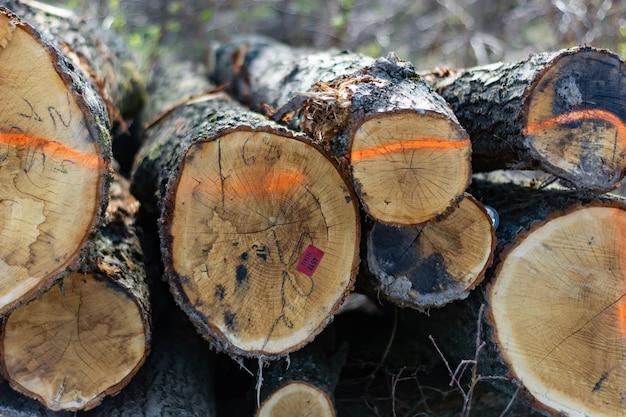 Etiquetas de plástico nas extremidades dos troncos recém cortados.