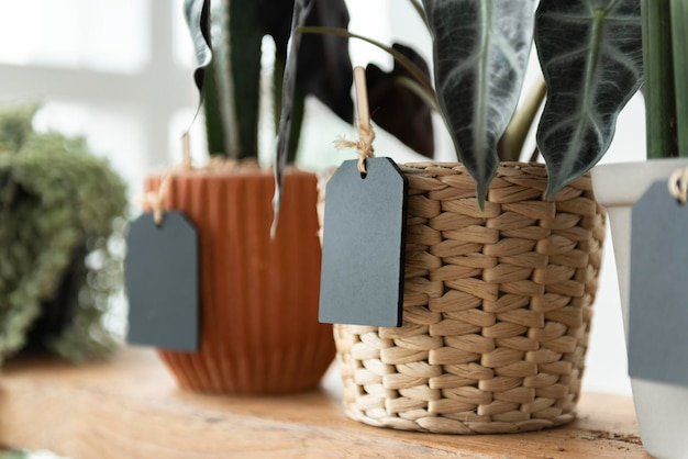 Etiquetas em plantas em uma floricultura