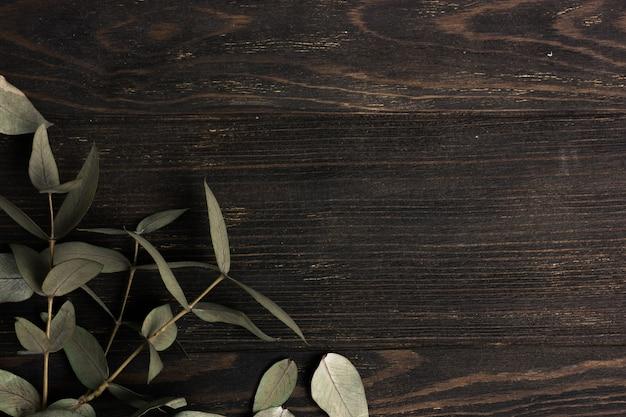 Eucalipto deixa ramos no fundo escuro de madeira