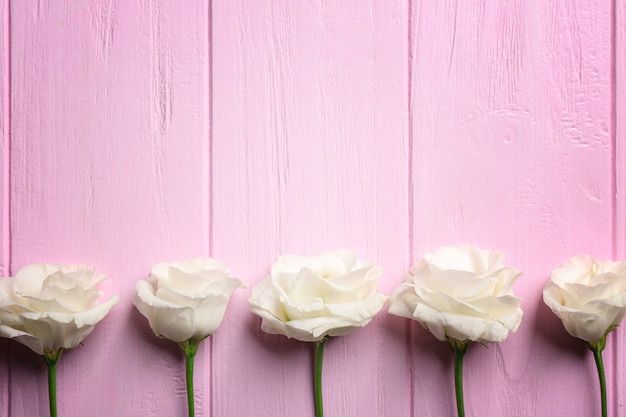 Eustoma em fundo rosa de madeira
