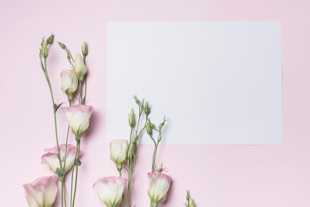 Eustoma fresco galhos de flores com papel em branco contra fundo rosa
