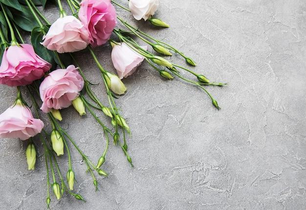 Eustoma rosa fresco