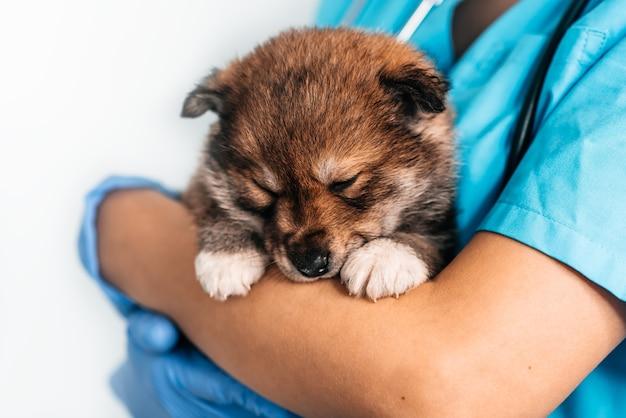 Exame de cachorro vira-lata em um veterinário em uma clínica veterinária. o exame de um animal de estimação, um cachorrinho engraçado nos braços de uma menina
