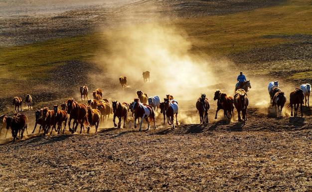 Executando um grupo de cavalos