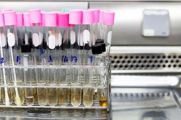 Experimentos de laboratório no laboratório