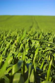 Exploração agrícola verde