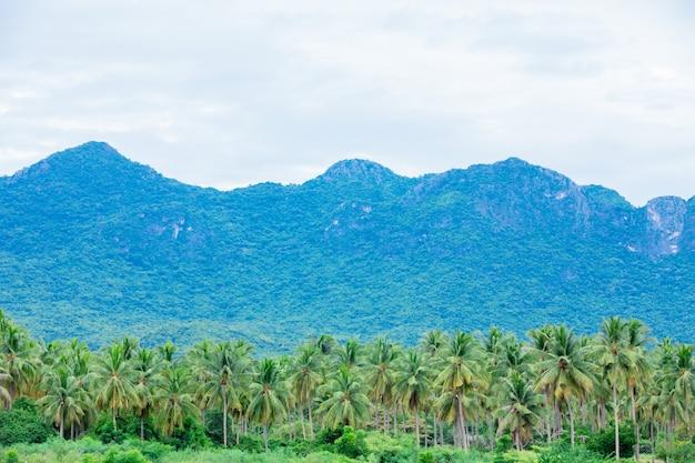 Explorações agrícolas e montanhas bonitas da árvore de coco em tailândia.