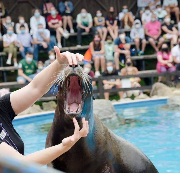 Exposição de leon marino