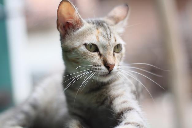 Expressão de gato bonito e adorável