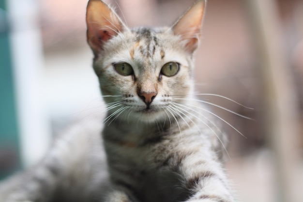 Expressão de gato fofo e adorável