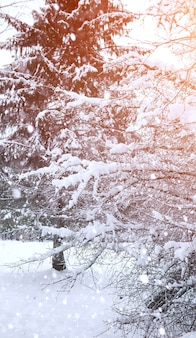 Extensões cobertas de neve da paisagem do inverno. um parque no inverno na neve. estrada em dia de inverno.